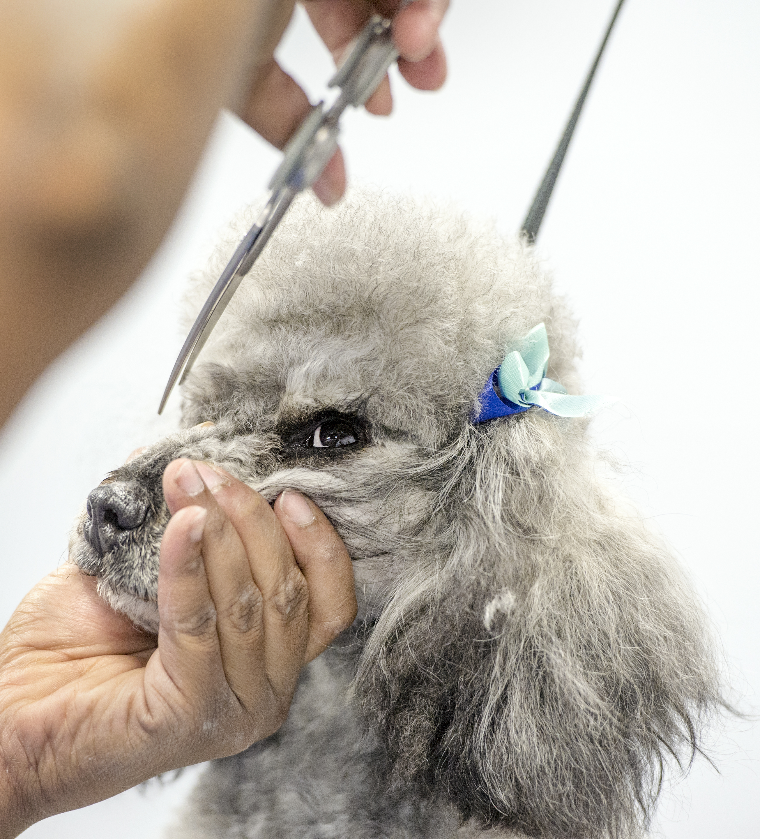 WHY DOG GROOMING? NUMBERS TELL THE STORY